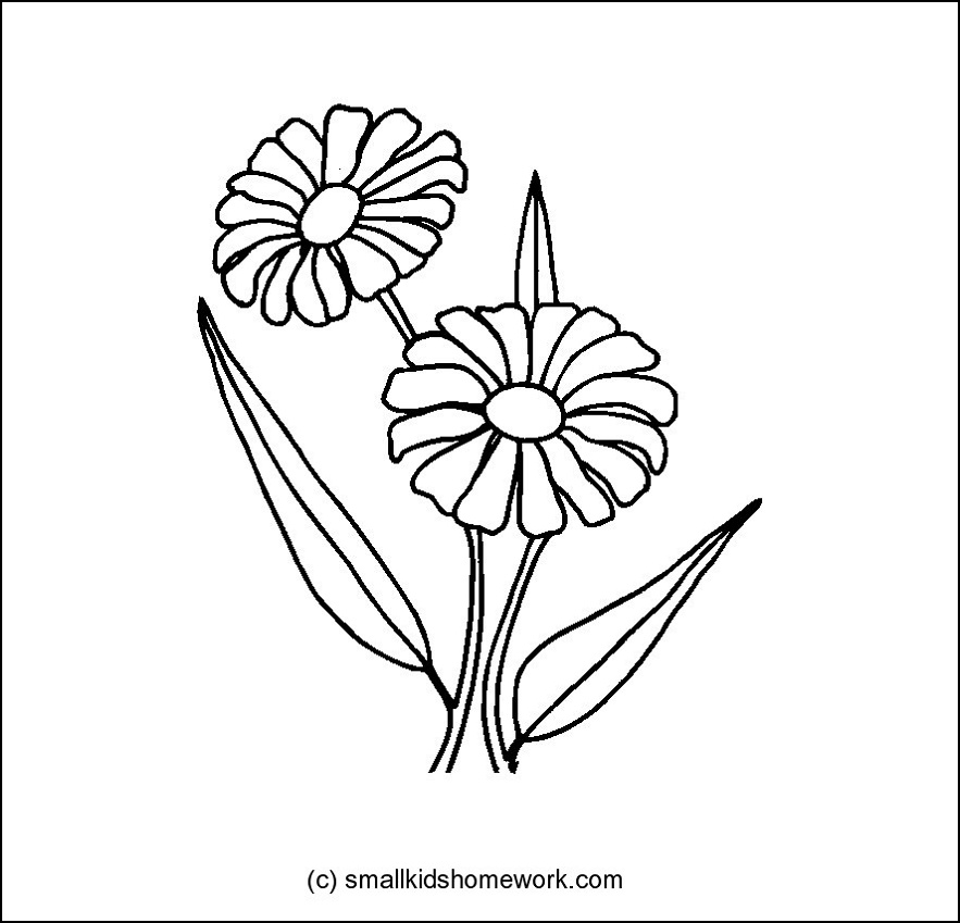 Daisy Flower Outline And Coloring Picture With Interesting