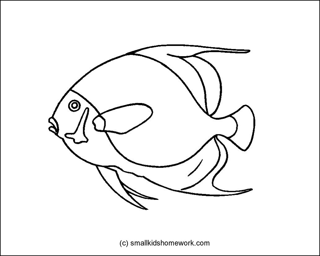 french angelfish outline picture for coloring