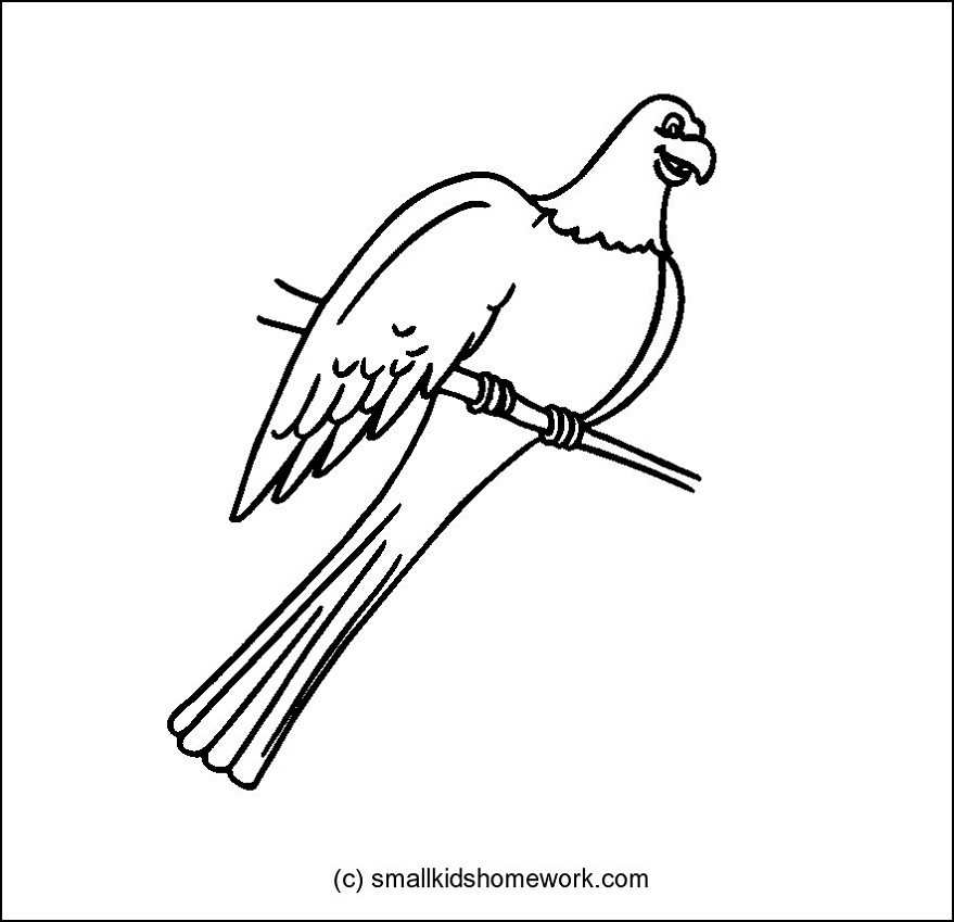 Parrot Bird Outline And Coloring Picture With Interesting