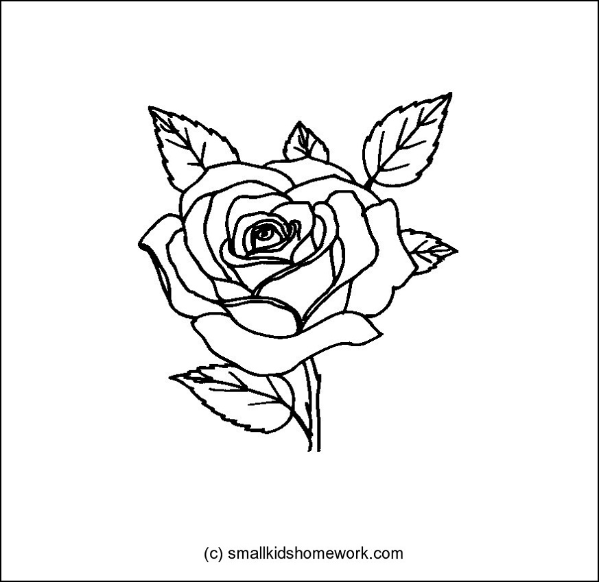 Rose Flower Outline And Coloring Picture With Interesting