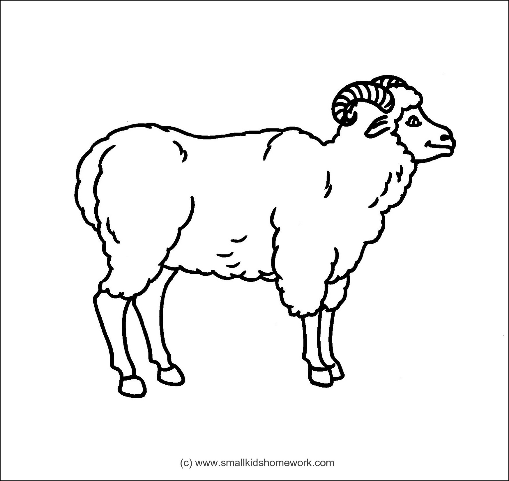 Sheep Outline and Coloring Picture with Interesting Facts