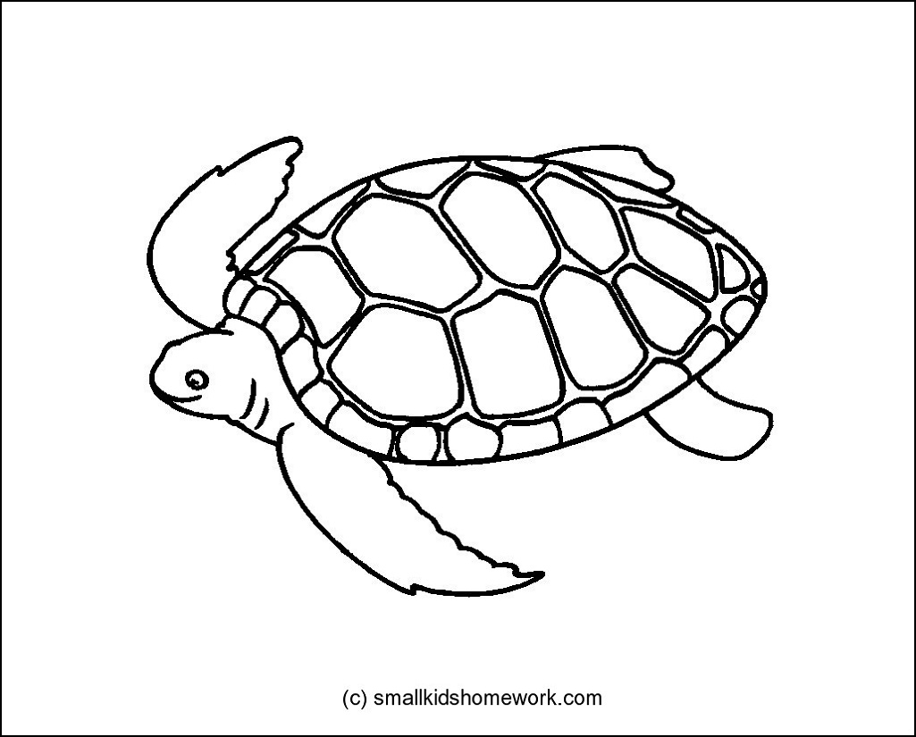 Turtle Outline Picture For Coloring Learning how to draw a turtle is very simple! small kids homework