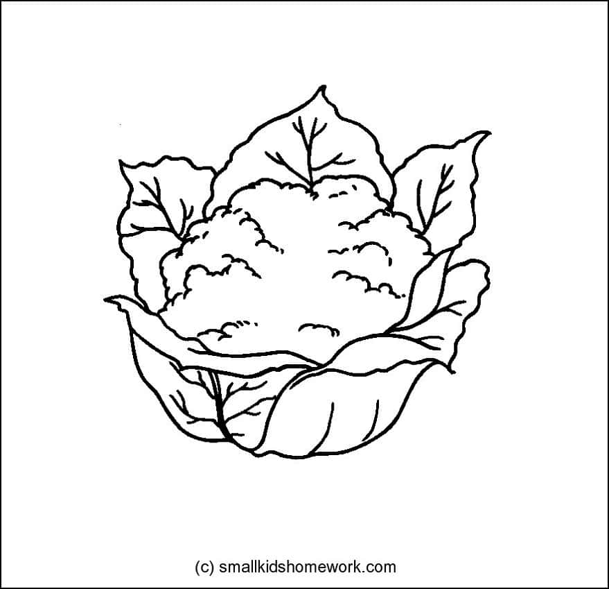 vegetables outline pictures and coloring pages for kids - Coloring Pages Leafy Vegetables