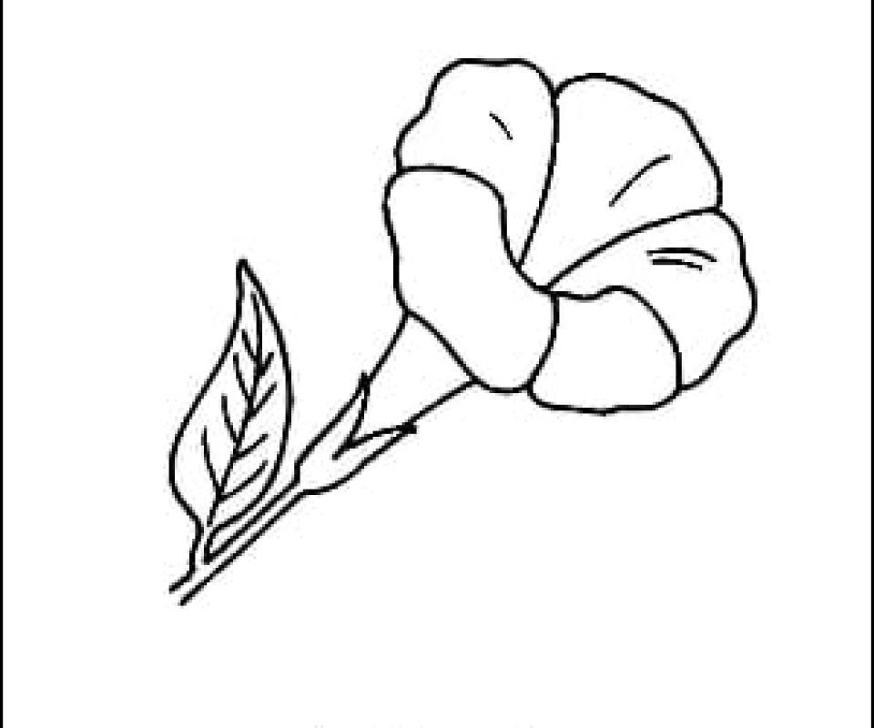 Zinnia Line Drawing : Zinnia flower outline and coloring picture