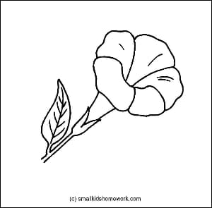 Allamanda Outline Picture