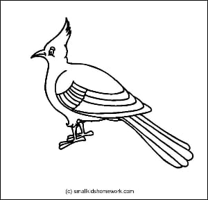 Bulbul Bird Outline And Coloring Picture With Interesting Facts