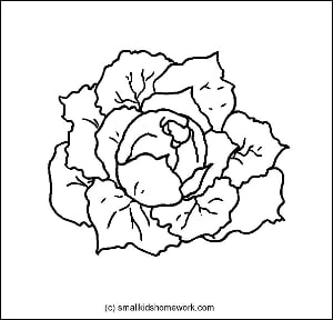 Cabbage Outline Picture