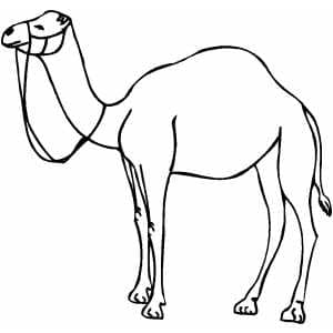 camel outline picture