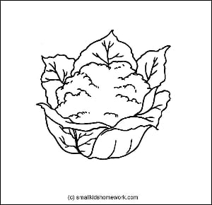 Cauliflower Outline Picture
