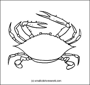 Crab Outline Picture