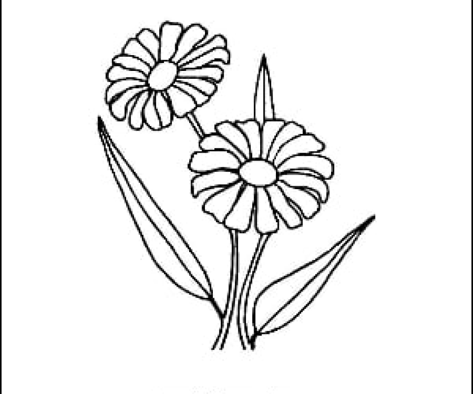 Daisy Outline Picture