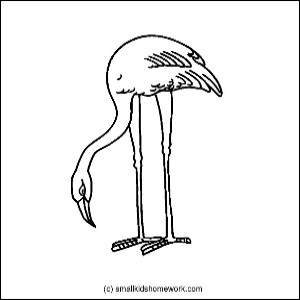 flamingo outline picture