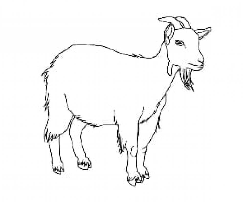 Goat outline picture