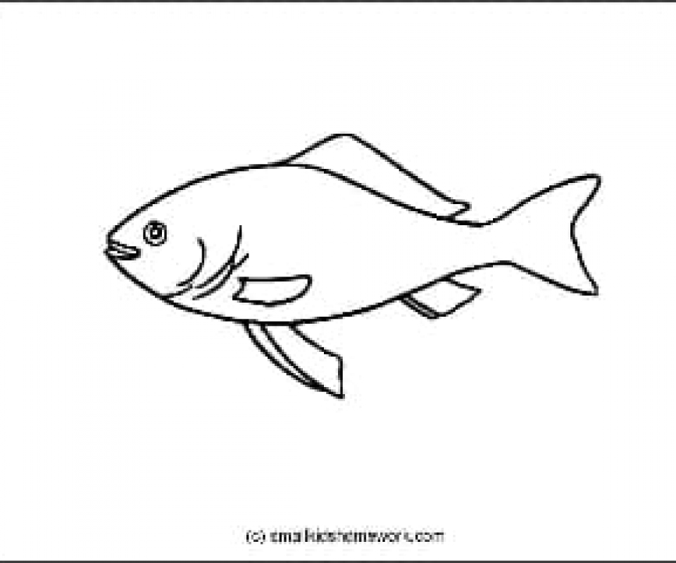 Gold Fish Outline Picture