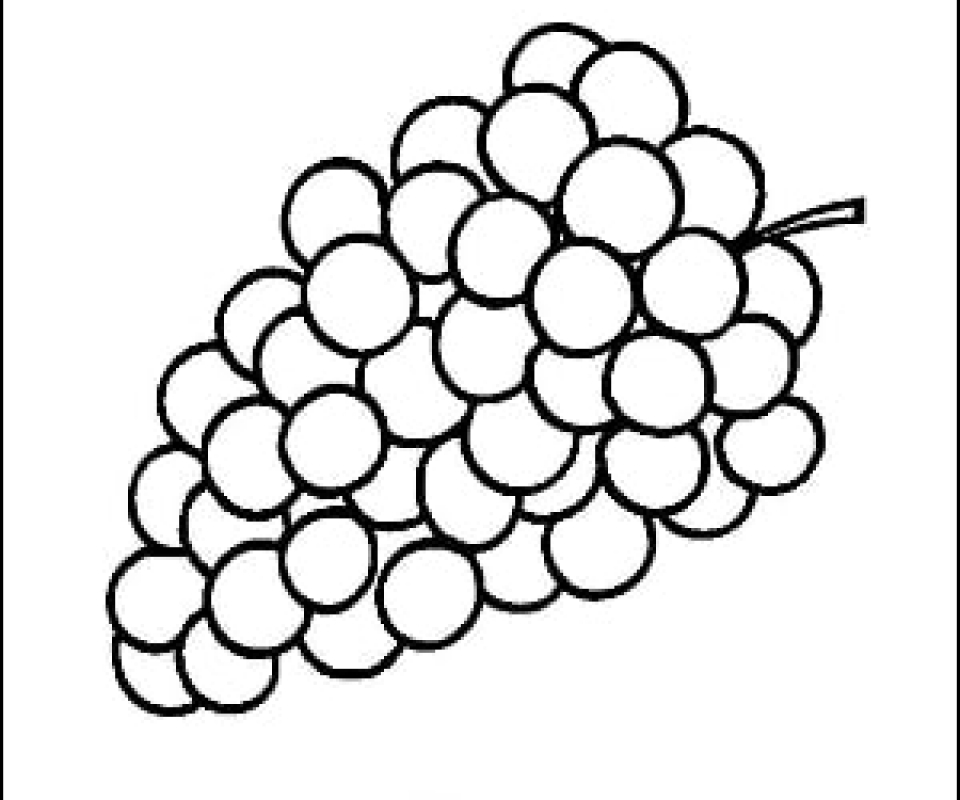 Grapes Outline Picture