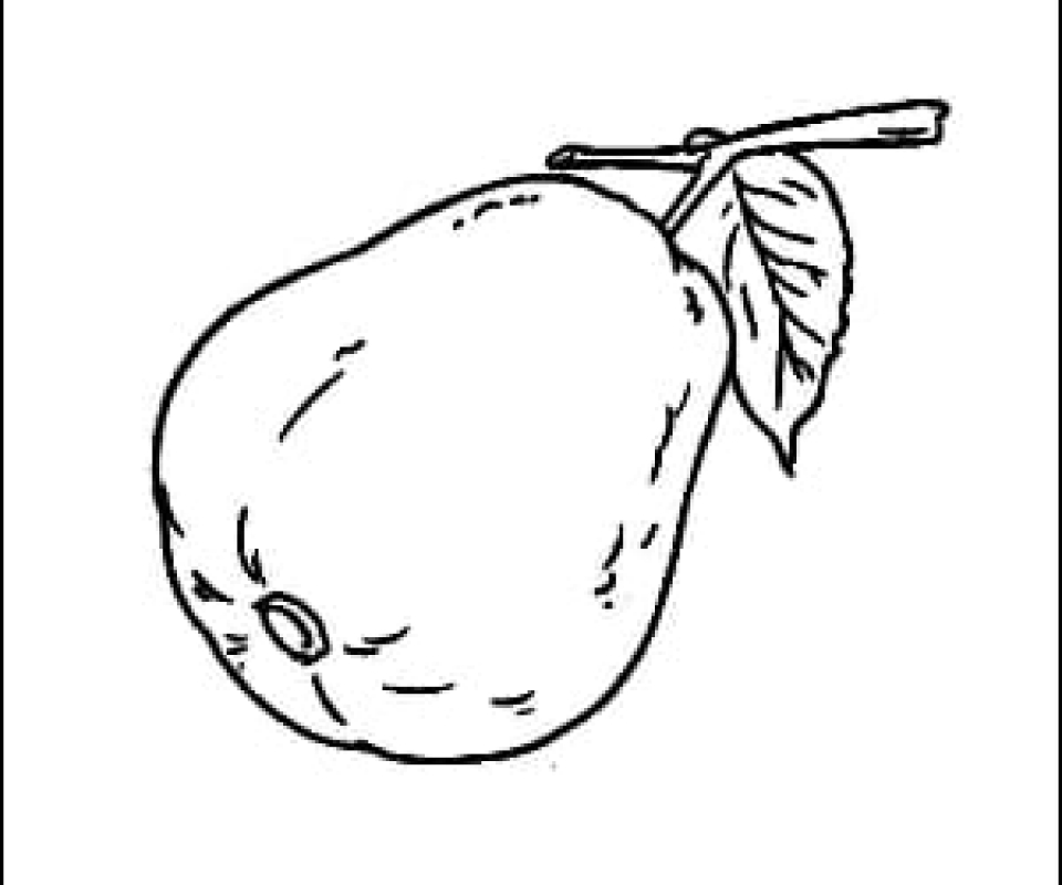 Guava Outline Picture