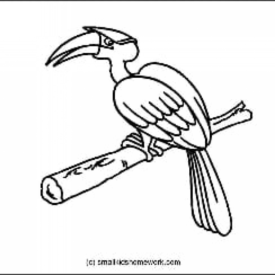 Hornbill Outline Picture