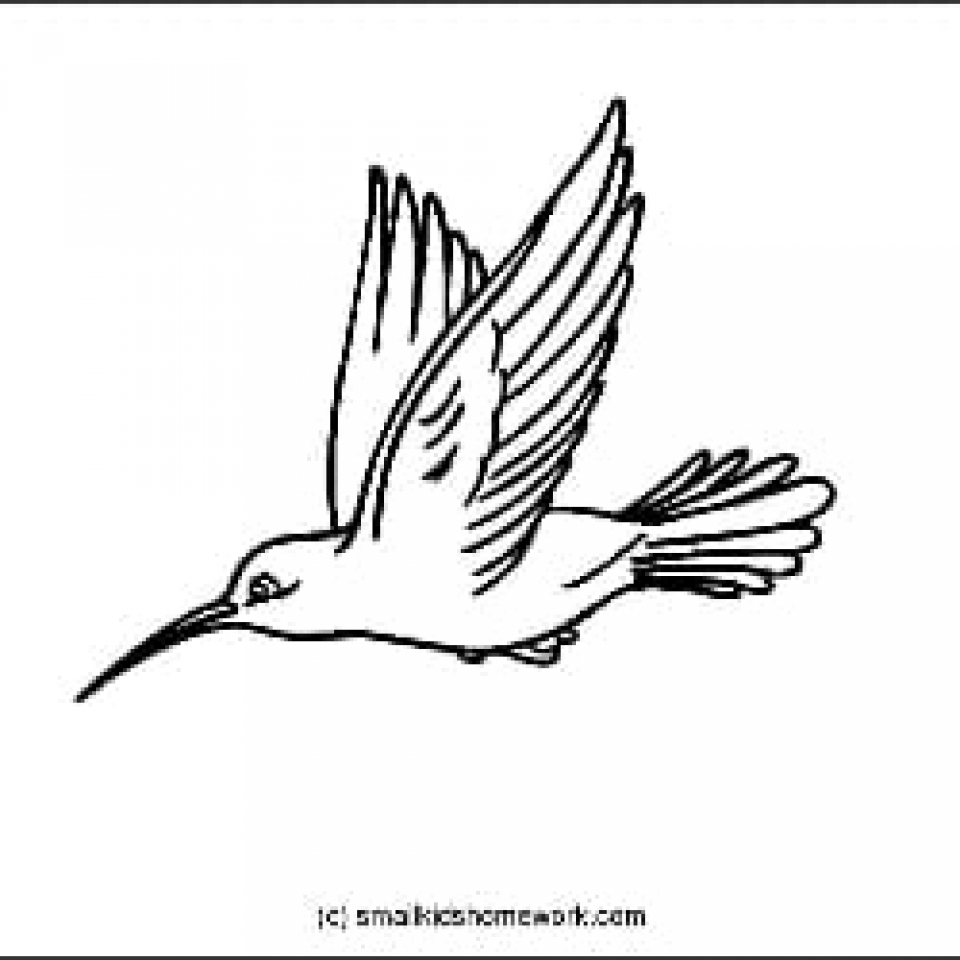 Humingbird Outline Picture