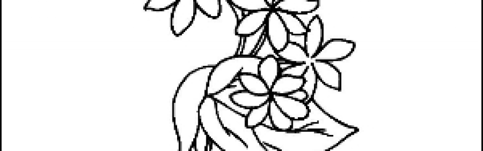 Jasmine Outline Picture