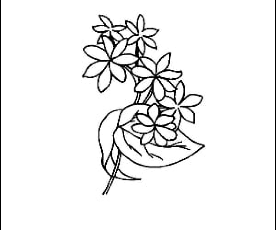 sparrow outline drawing