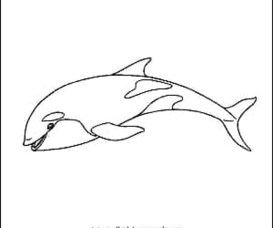 Killer Whale Outline Picture