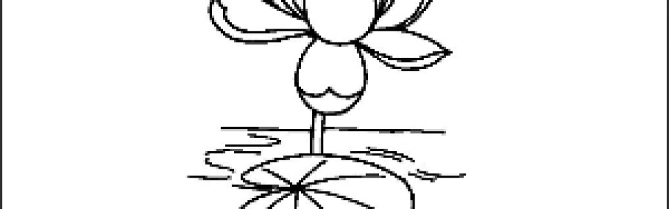 Lotus Outline Picture