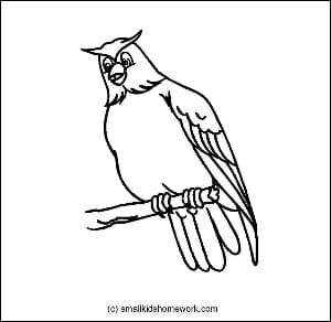 Owl Outline Picture