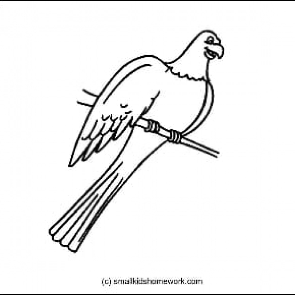 Parrot Outline Picture