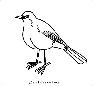 Robin Outline Picture