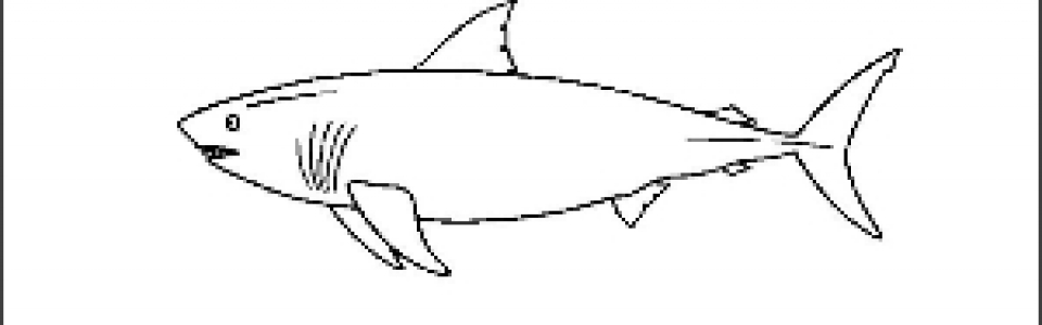 Shark Outline Picture