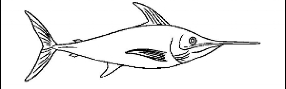 Sword Fish Outline Picture