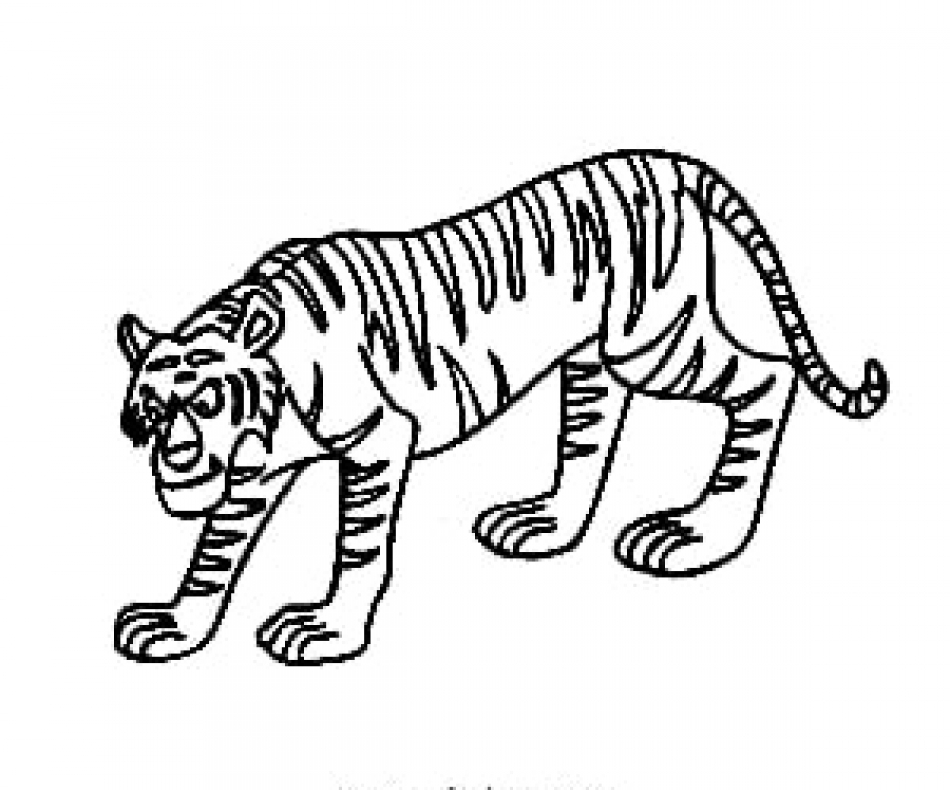 tiger outline picture