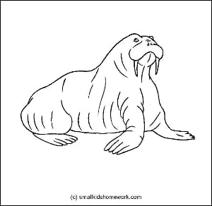 Walrus outline picture