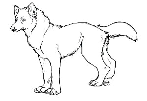 wolf outline picture