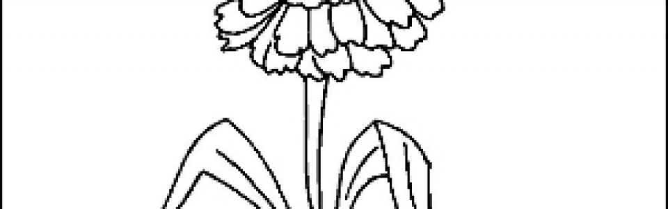 Zinnia Outline Picture