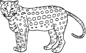 cheetah outline picture