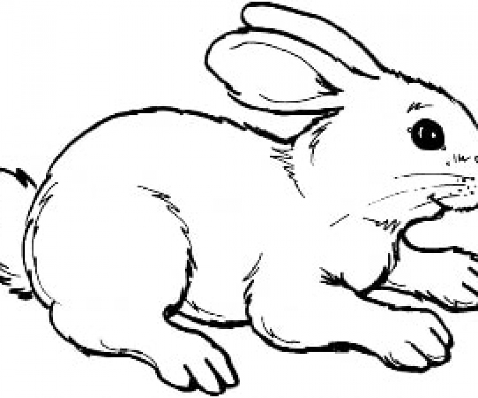 rabbit outline picture